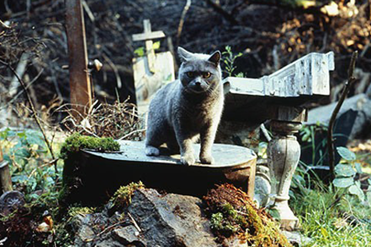 фильмы про животных бесплатно смотреть: