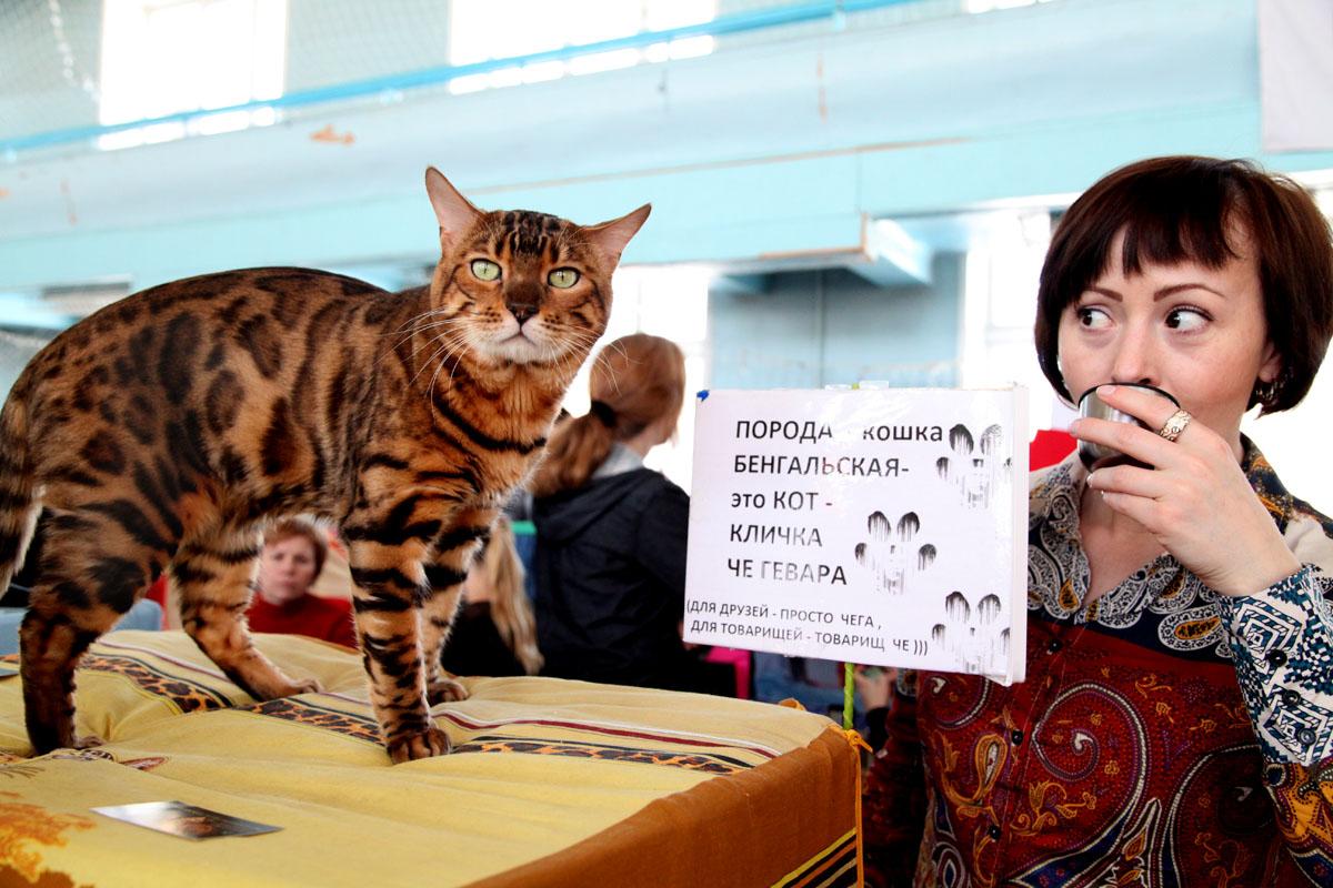 Секс парня с домашней кошкой и фото 1 фотография