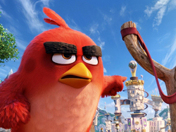 ������� �Angry Birds � ���� �����!